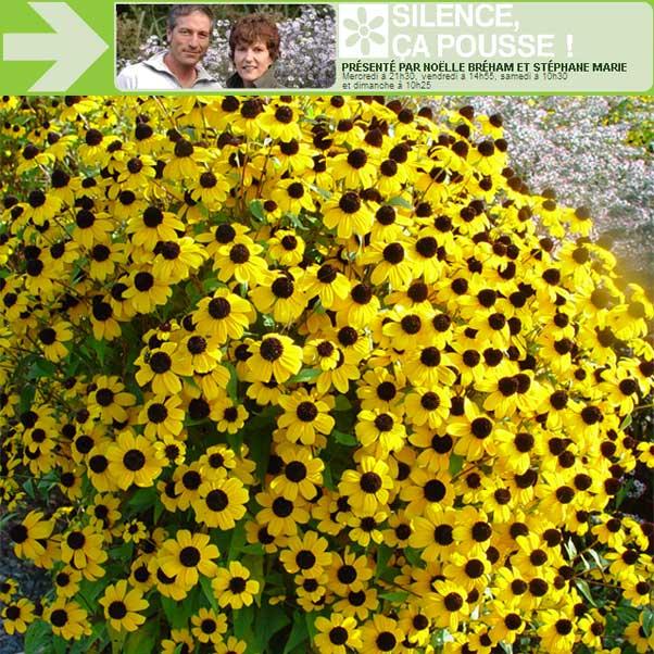 Plantes vivaces rustiques images for Plantes vivaces rustiques